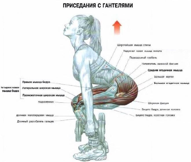 Схема работы мышц при приседании