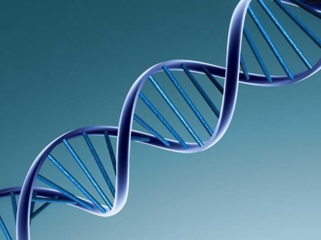 Передача генной информации