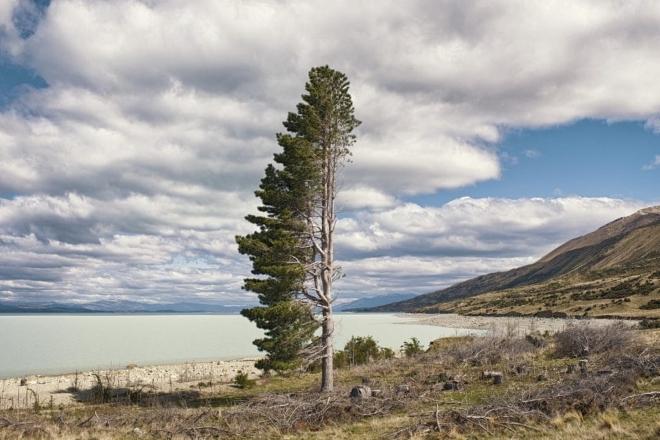 Отдельно стоящее дерево