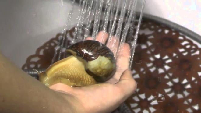 Мытье улиток