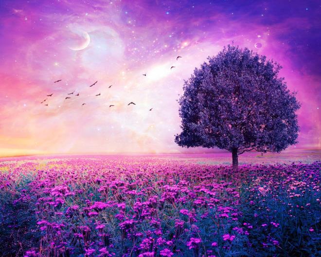 Фиолетовый и сиреневый