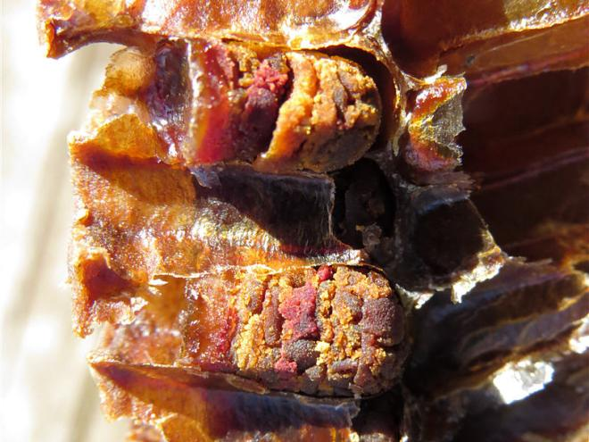 Перга пчелиная - полезные свойства и противопоказания
