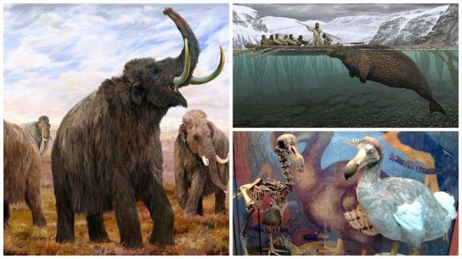 Вымершие животные или вымирающие в России и мире
