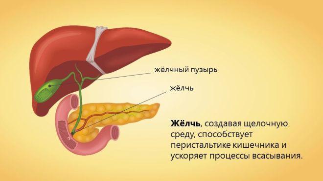 Желчь в желудке: причины, симптомы и лечение