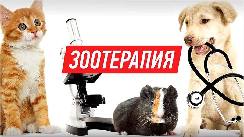 Зоотерапия