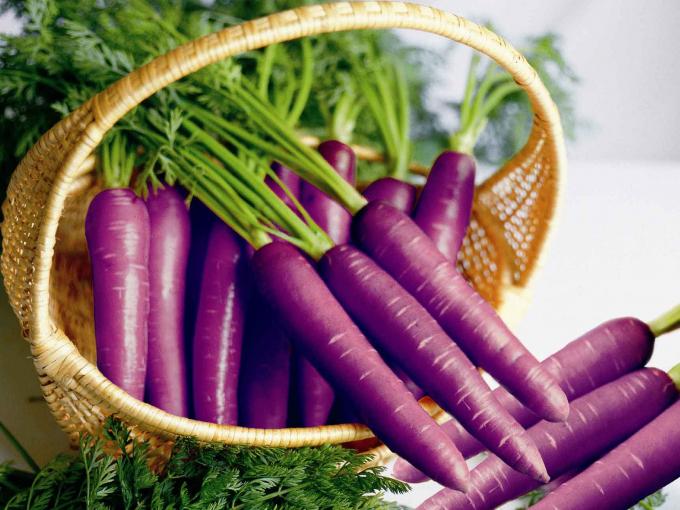 Раньше морковь была фиолетового цвета