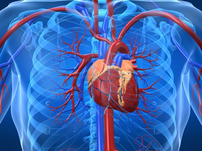 Почему начинает болеть сердце с возрастом