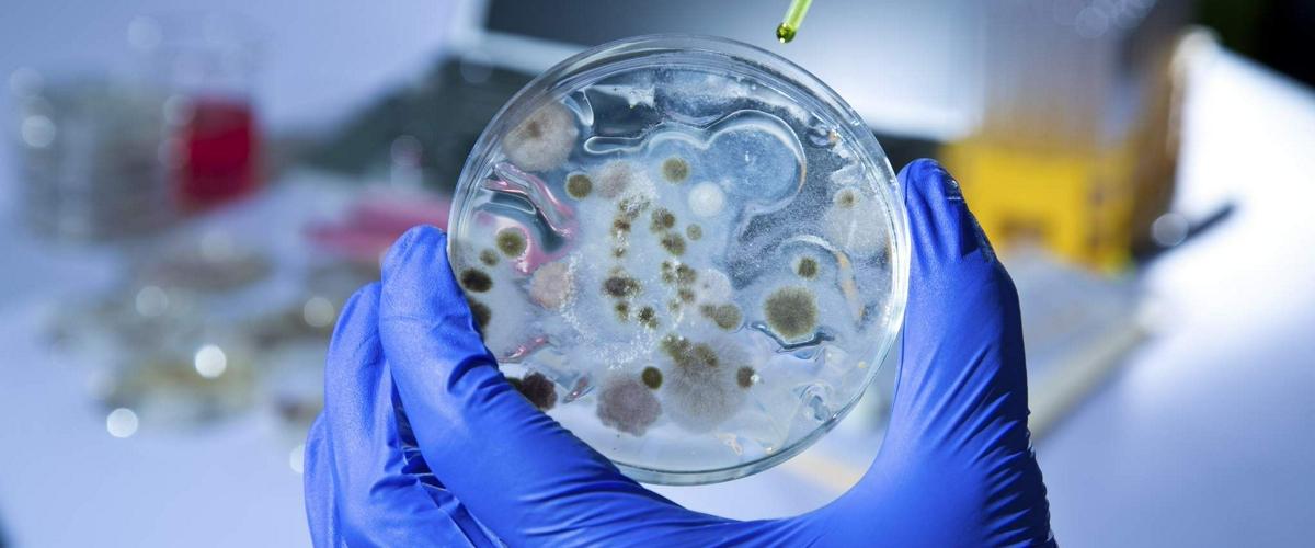 Чем опасен загадочный грибок Candida auris, который появился из-за глобального потепления несколько лет назад