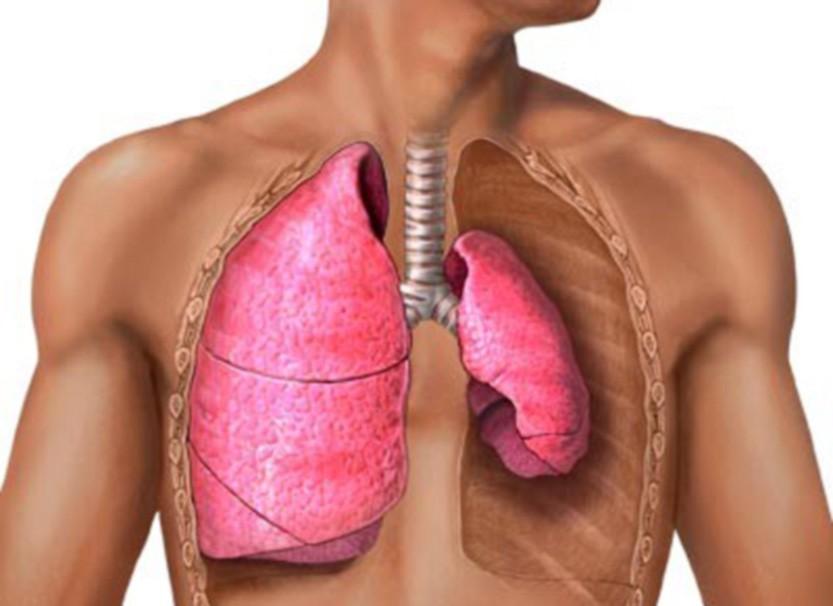 Боль в области сердца не всегда относится к нему, может болеть другой орган