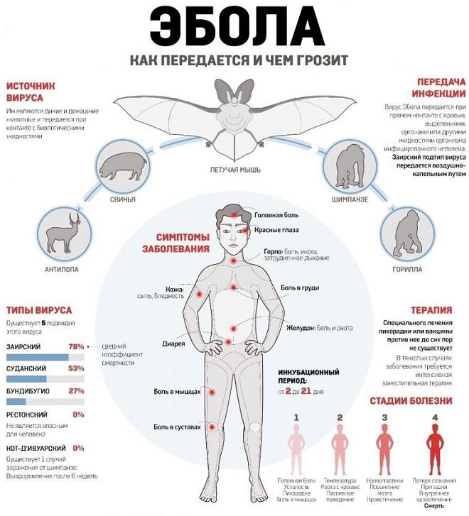 Что такое эбола: симптомы, диагностика и лечение лихорадки