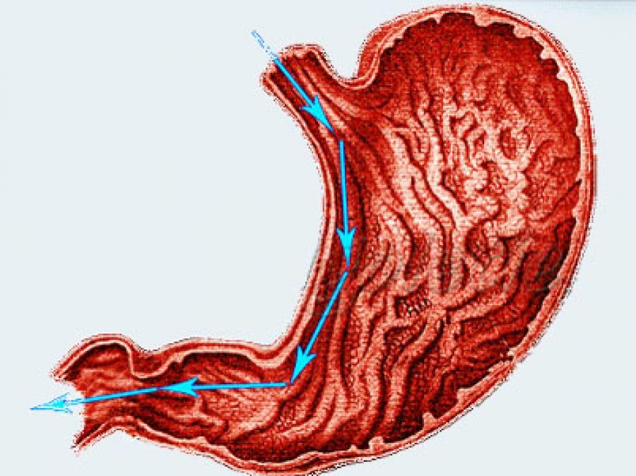 Употребление воды во время еды никак не влияет на пищеварение и полезно