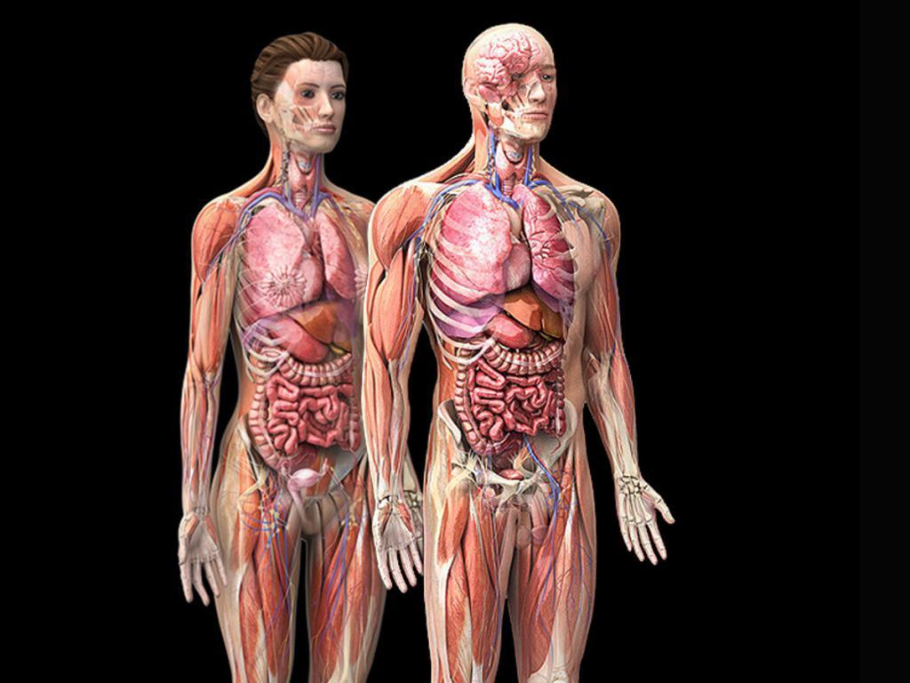 Человек и тело картинки