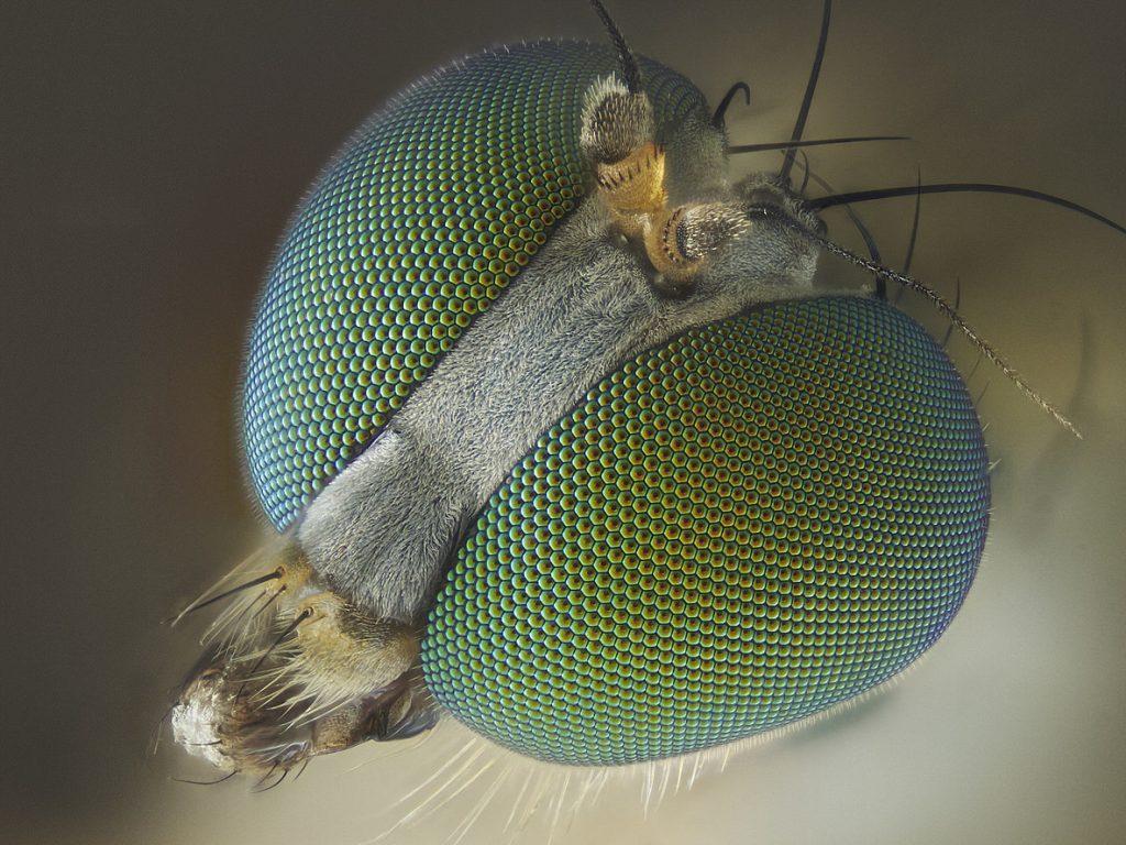 Где у мухи находятся уши, как она слышит?