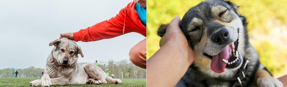 Болезни, передающиеся от собак